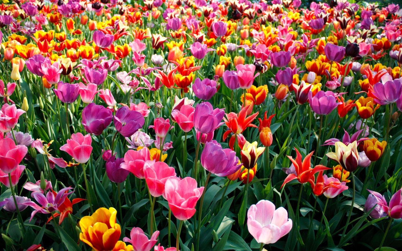 Croch la handmade a tend ncia desta primavera ver o for Trasforma un semplice terreno in un colorato giardino