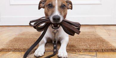 Grand Plaza Shopping – Pet Friendly: tudo que você precisa saber!