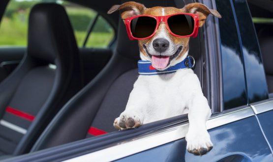 Pet's Day: um dia para curtir pertinho do seu pet!