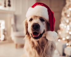 5 cuidados para o fim de ano com os pets